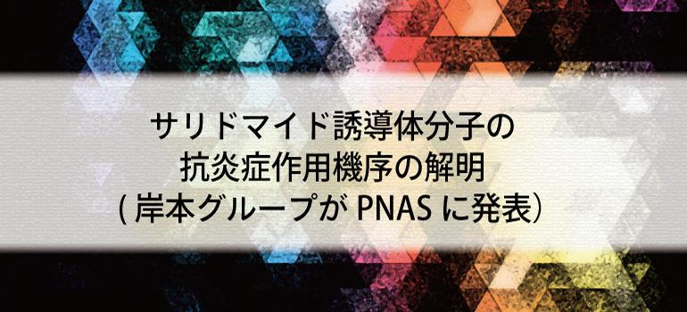 サリドマイド誘導体分子の抗炎症作用機序の解明(岸本グループがPNASに発表)