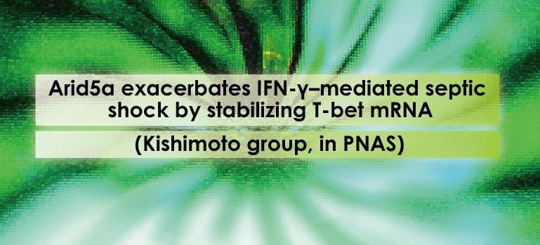 Arid5a exacerbates IFN-γ-mediated septic shock by stabilizing T-bet mRNA (Kishimoto group, in PNAS)