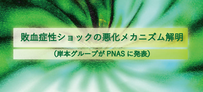 敗血症性ショックの悪化メカニズム解明(岸本グループがPNASに発表)