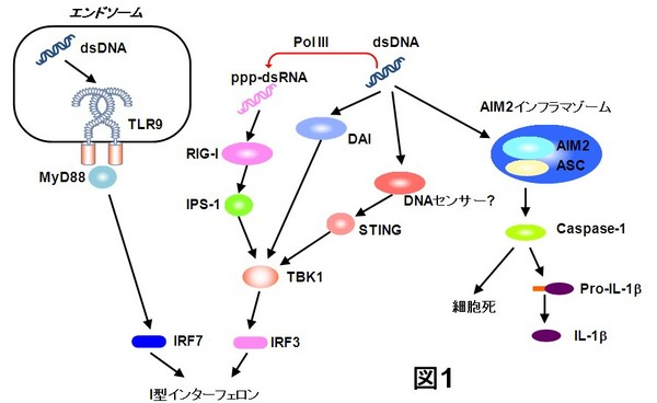 20101206_Kawai_Fig1.jpg